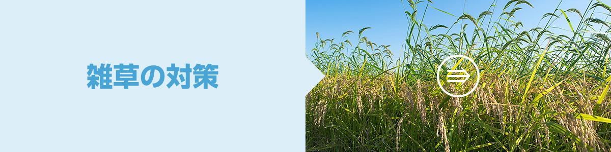 雑草の対策